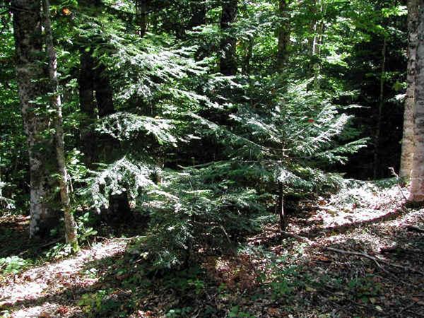 Le Riserve Naturali tutelate dal Corpo Forestale