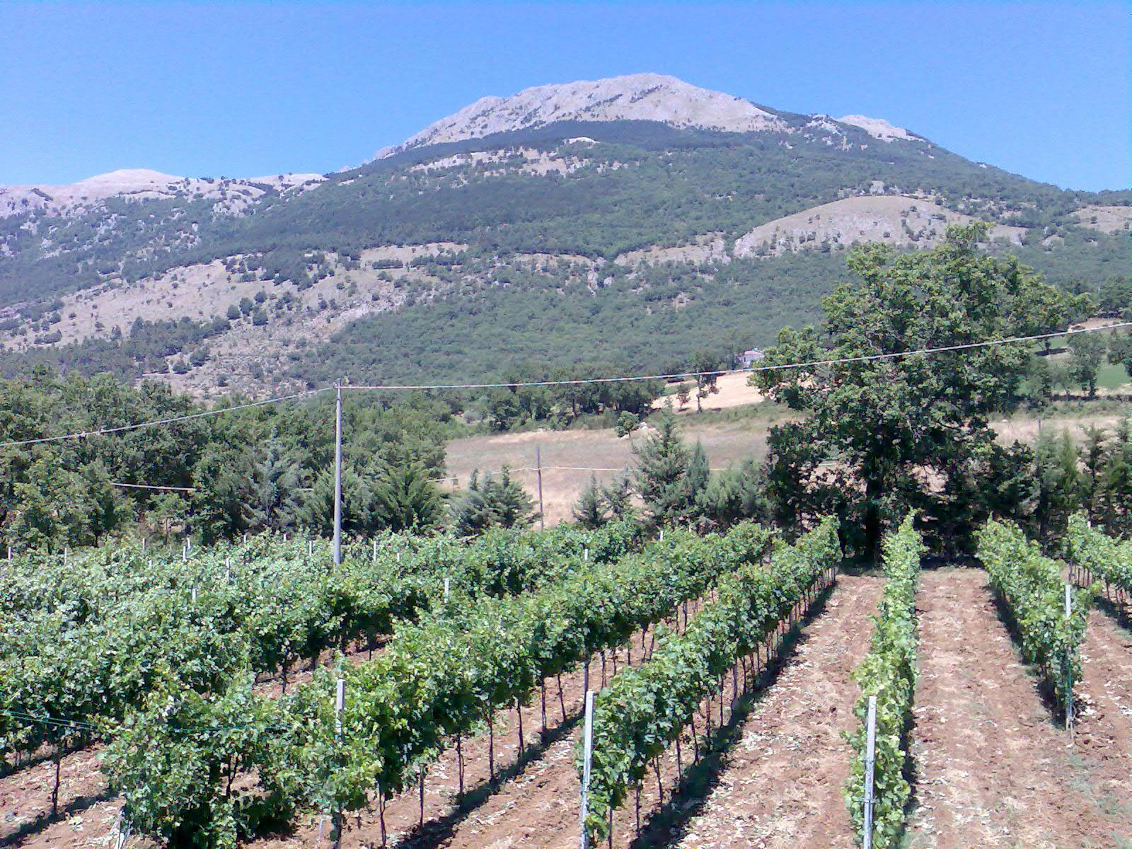 Azienda Agricola De Blasiis