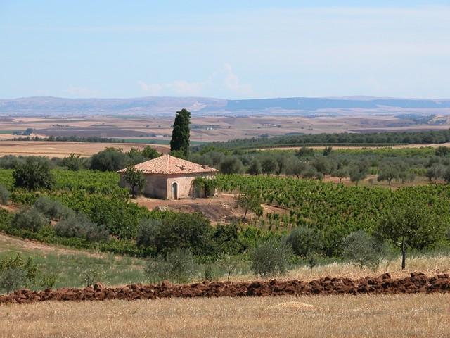 Azienda Agricola San Martino