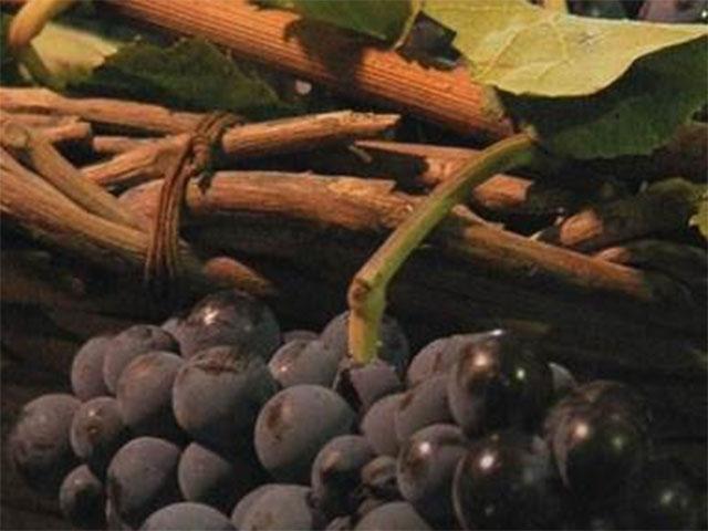 Giannattasio Viticultori in Barile