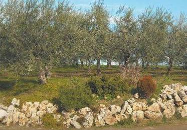 Azienda Agricola Bovenga Nicola