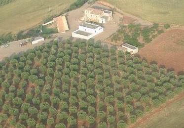 Azienda Agricola Barone Brancalasso