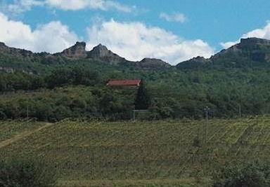 Azienda Agricola Vitivinicola Amedeo Castelluccio