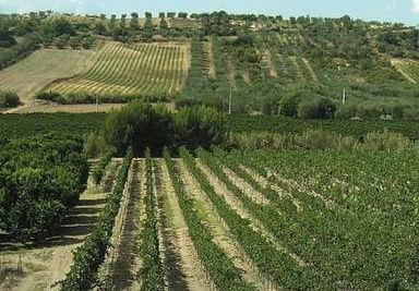 Società Agricola Ditaranto srl