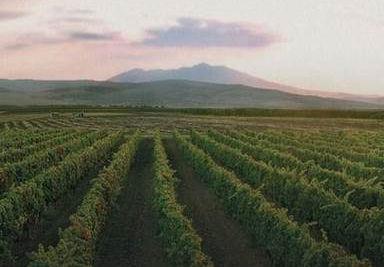 Vulcano e Vini srl