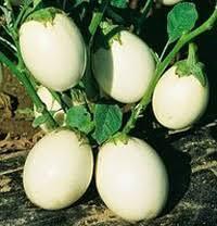 Melanzana bianca di Senise
