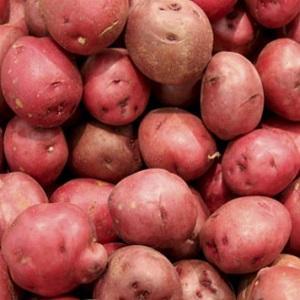 Patata rossa di Terranova del Pollino