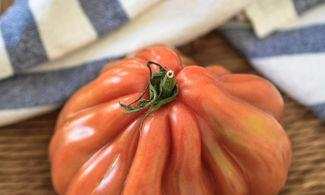 Pomodoro costoluto di Maratea